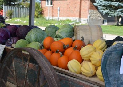 Seasonal vegetables, fresh from the farm Shelburne