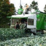 Brussels Sprouts Harvester