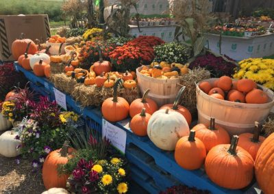 Fall pumpkins and planters