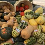 Squash and vegetable harvest